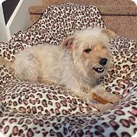 Adopt A Pet :: May - San Antonio, TX