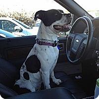 Adopt A Pet :: Minnie - La Habra, CA