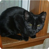 Adopt A Pet :: Midnight - Carlisle, PA