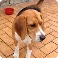 Adopt A Pet :: Alfie - Palm Bay, FL