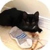 Adopt A Pet :: Batman - Vancouver, BC