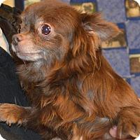 Adopt A Pet :: Kachita - Prole, IA