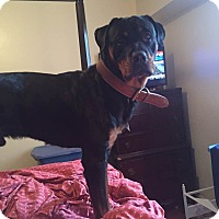 Adopt A Pet :: Leo - Northumberland, ON