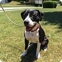 Adopt A Pet :: Pepper II - Alpharetta, GA