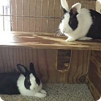 Adopt A Pet :: Danny and Delft - Williston, FL
