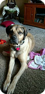 Mastiff Mix Dog for adoption in Yukon, Oklahoma - Duke