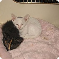 Adopt A Pet :: Cueball - Dallas, TX