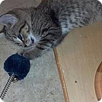 Adopt A Pet :: Kirk - Sterling Hgts, MI