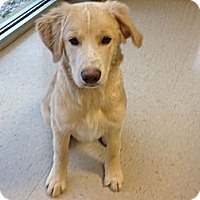 Adopt A Pet :: Oprah - Denver, CO