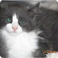 Adopt A Pet :: Bentley - Riverside, RI