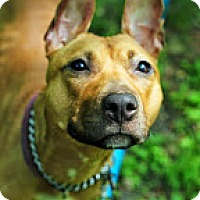 Adopt A Pet :: Pistachio - Tinton Falls, NJ