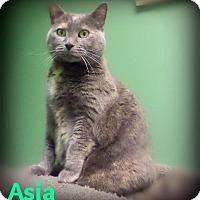 Adopt A Pet :: Asia - Pekin, IL