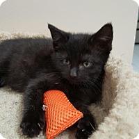Adopt A Pet :: Jessabelle - Speonk, NY