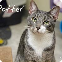 Adopt A Pet :: Potter - Ocean City, NJ