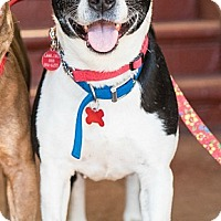 Adopt A Pet :: Lois - Los Angeles, CA