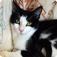 Adopt A Pet :: Badger - Richmond, VA