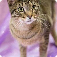 Adopt A Pet :: Huxley - Oviedo, FL