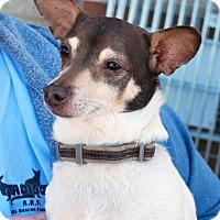 Adopt A Pet :: Radar - Madison, AL