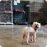 Adopt A Pet :: Delilah - SHELBY TWP, MI