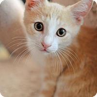 Adopt A Pet :: Ben - Lake Worth, FL