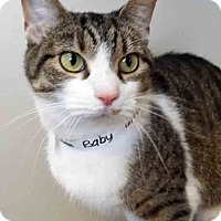 Adopt A Pet :: ADOPTED!!!   Baby - Downers Grove, IL