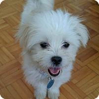 Adopt A Pet :: Louise - Kirkland, QC