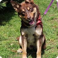 Adopt A Pet :: Joe - Harrison, NY