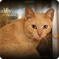Adopt A Pet :: Gabby - Springfield, PA