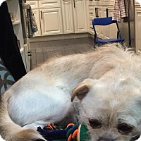 Adopt A Pet :: Spencer - Tenafly, NJ