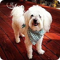 Adopt A Pet :: Leo - Costa Mesa, CA