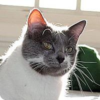 Adopt A Pet :: Serena - Palmdale, CA