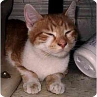 Adopt A Pet :: Riley - Portland, ME