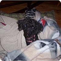 Adopt A Pet :: Faline - Madison, WI