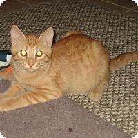 Adopt A Pet :: JAKE - 2014 - Hamilton, NJ