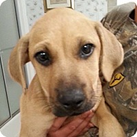 Adopt A Pet :: Buttercup - Marshfield, MA