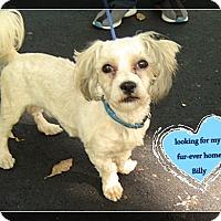 Adopt A Pet :: Billy- - Franklinton, NC