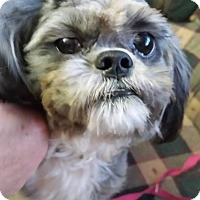 Adopt A Pet :: Mackie - Lawrenceville, GA