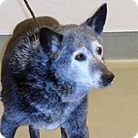 Adopt A Pet :: Midori - Wildomar, CA