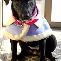 Adopt A Pet :: Lily - Salt Lake City, UT