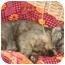 Photo 2 - Domestic Shorthair Cat for adoption in Etobicoke, Ontario - Stella