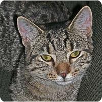 Adopt A Pet :: Mia - Carlisle, PA