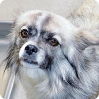 Adopt A Pet :: India - Encinitas, CA