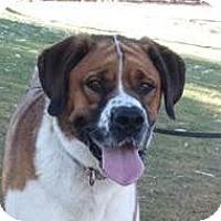 Adopt A Pet :: Zoey - Glendale, AZ