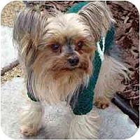 Adopt A Pet :: CC - Tallahassee, FL