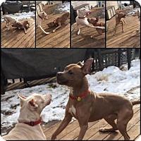 Adopt A Pet :: Simba - Cary, IL