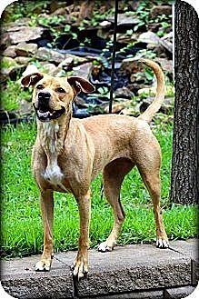 Labrador Retriever Mix Dog for adoption in Byron, Georgia - Sandy