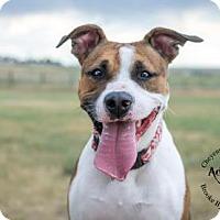 Adopt A Pet :: Ruth - Cheyenne, WY