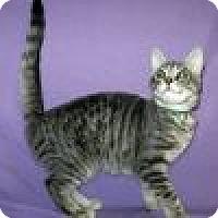 Adopt A Pet :: Lalita - Powell, OH