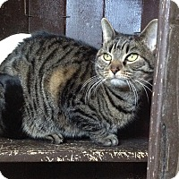 Adopt A Pet :: Lily - Lafayette, NJ