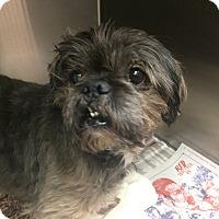 Adopt A Pet :: Petey - Oak Ridge, NJ